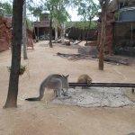Wild Life Sydney Zoo Photo