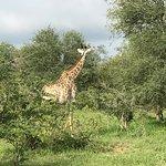 Photo de Baobab Ridge