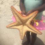 Starfish found on Grand Anse beach