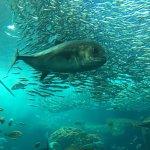 Foto de Enoshima Aquarium