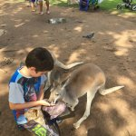 feeding the kangaroos