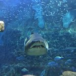 Foto di Aquarium Donostia-San Sebastian