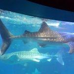 Osaka Aquarium Kaiyukan Foto