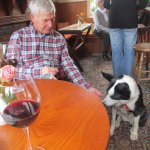 in the bar - gorgeous pub dog