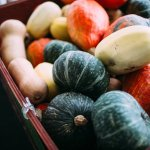 Varieties of squash, grown in Lepp Farm Market's Abbotsford Farms