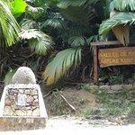 Foto de Vallee de Mai Nature Reserve