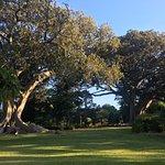 Arderne Gardens