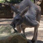 You can get really close to kangaroos