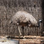 The emu is lovely!