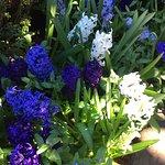 Filoli spring flowers