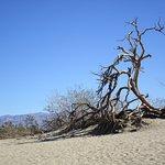 Brush on the dunes