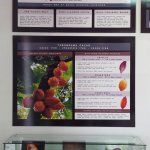 Cacao exhibit at the chocolate shop - free to browse.