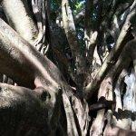 My Daughter in the Bayoyn Tree