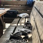 shop kittehs snoozing on the deck