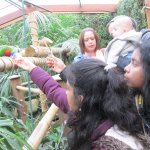 Feeding of Parrots
