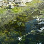 Photo of Vermilion Lakes