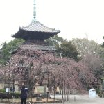 Photo of Dojoji Temple