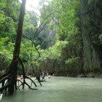 Mangroves inside the huongs