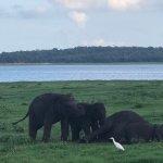 Photo de Minneriya National Park