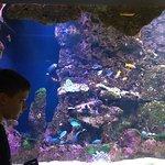 Foto de Dallas World Aquarium