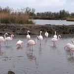 Foto de Le Parc Ornithologique de Pont de Gau