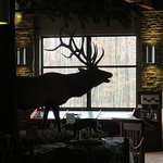 silhouette of bull elk as seen from entrance