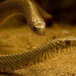 Foto di Nehru Zoological Park