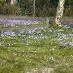 Photo of Botanical Gardens (Hortus Botanicus)