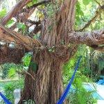 Photo de Eco-Hotel El Rey Del Caribe