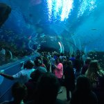 This was an awesome day to spend at the aquarium.  Enjoy the photos