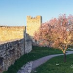 Photo of The Belgrade Fortress