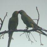 Photo de Keoladeo National Park