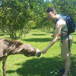 They have donkeys on the farm and you can feed them!