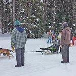 Dog race on Grand Mesa