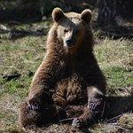 ours en boudha