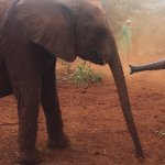 Foto di David Sheldrick Wildlife Trust