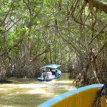 Boats down the mangrove swamp tunnel