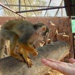 Photo of Monkey Park