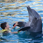 """""""Dancing"""" with a dolphin"""