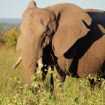 Foto di Idube Game Reserve Lodge