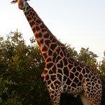 Idube Game Reserve Lodge Foto