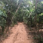 The driveway into the lodge, it made you feel like you were deep in the jungle