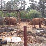 Enjoyed watching the elephants eat