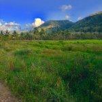 riding through the largest banana plantation on the island