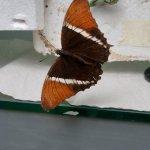 A butterfly in the butterfly garden