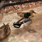 Ducks in lobby