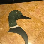 Duck in the elevator