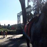 Gregory Lake: Pony riding