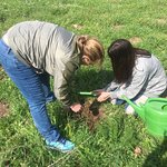 Planting a tree in the holy land