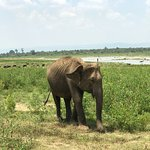 Photo of Udawalawe National Park